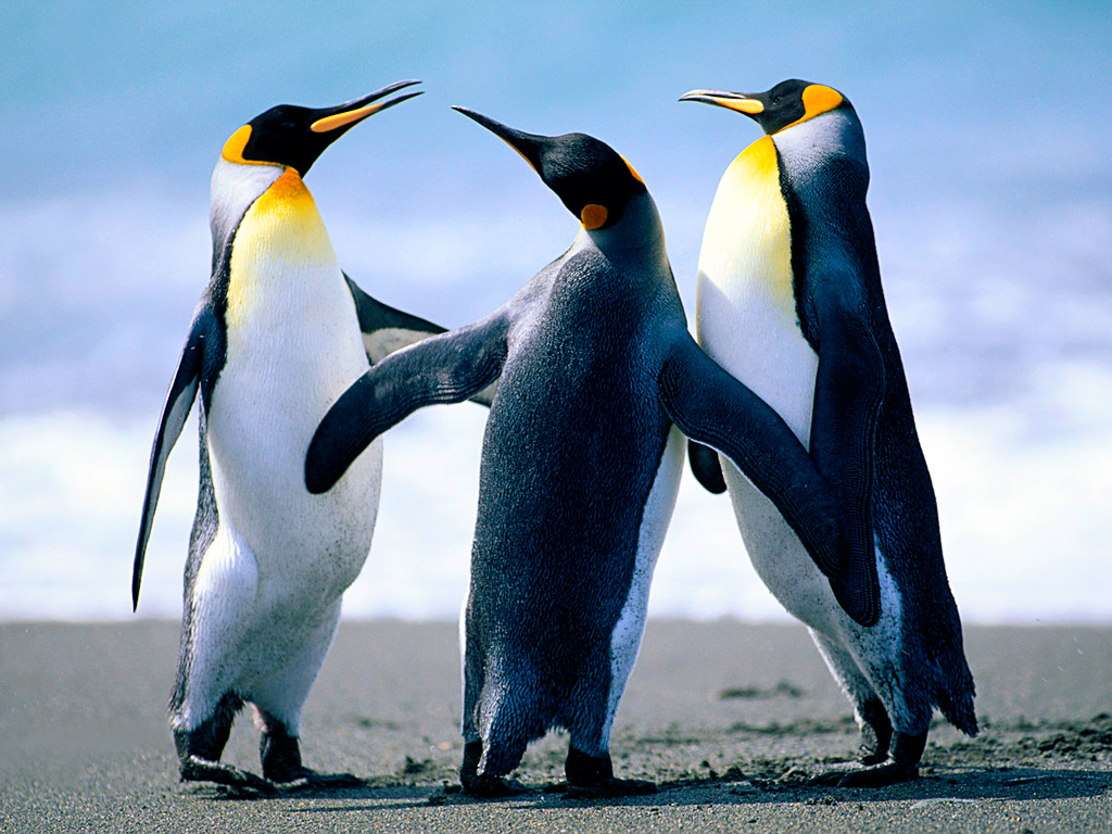 Penguins (Sample image)